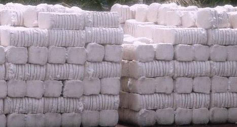 Through the TCP to buy cotton bales 10, Sikandar Hayat boson